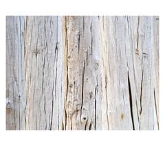 AR1903750-B (-AR-) Tags: palen posts poles strand beach zeeland haamstede hout wood zee sea