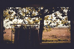 Contrast... (manu.sierra) Tags: clothes landscape tree colour contrast framework