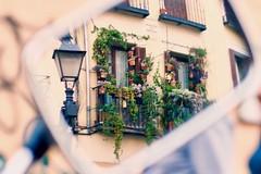 LVM: Un espejo (AriCatalán) Tags: jackierueda juegolvm plantas balcon plants balcony mirror espejo