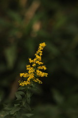 Yellow (historygradguy (jobhunting)) Tags: easton ny newyork upstate washingtoncounty plant yellow