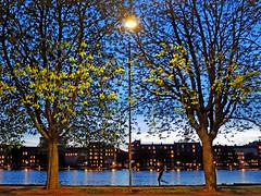 Running through Symmetry - Copenhagan, Denmark (TravelsWithDan) Tags: symetrical runner candid night twilight streetlight water city urban canal copenhagan denmark europe scandenavia canong9x trees