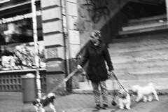 Stadt (tiltdesign2016) Tags: yashicaelectro35gsn analogphotography bw wuppertal elberfeld kodakd7611 plustekopticfilm7600ise kodaktrix400 stadt strase street hund dog