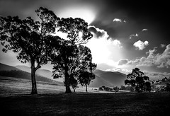 Licola View # 1 (Redux) (Graeme O'Rourke) Tags: lrcfa21158v6 trees cloud light bw black white landscape mountains nature victoria australia farm cattlestation station shade shadows woolshed bright blackandwhite hills forest bush