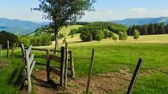 Parc naturel régional des Ballons des Vosges Oberbruck (claudiemenoud) Tags: nature montagne paysages france landscape nikon quiet coolpix barrier campagne vosges champ calme barrière b700 régionsfrançaises