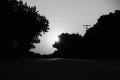 All Quitet (Gene Ellison) Tags: street road suburban trees powerlines poles light shadow evening sun star blackwhitephotos bw fujifilm acros sooc