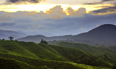 Morning (Pawel Wietecha) Tags: cameronhighlands asia malaysia mountains hills tea plantation clouds sunset sun sky blue yellow orange travel trip color light colors vivid outside outdoor journey coth5 green landscape sunrise