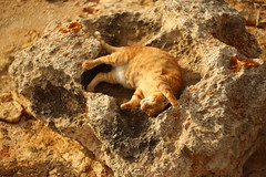 IMG_3962 Rubio, Mallorca (Fernando Sa Rapita) Tags: mallorca sarapita rubio cat gato mascota pet orange ginger happy feliz canon canoneos eos6d helios helios44m helios44m58 bokeh swirlybokeh