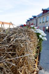 Haystack (jannaheli) Tags: tallinncruise tallinn estonia nikond7200 nature naturephotography city citylife haystack