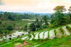 DSC_3330 (Sebastien J Bernard) Tags: jatiluwih rice terraces