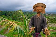DSC_3325 (Sebastien J Bernard) Tags: jatiluwih rice terraces