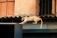 (sharmi_diya06) Tags: street streetphotography animal cat nature evening action outside portrait