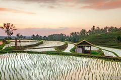 DSC_3337 (Sebastien J Bernard) Tags: jatiluwih rice terraces