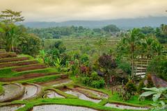 DSC_3332 (Sebastien J Bernard) Tags: jatiluwih rice terraces