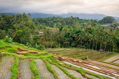 DSC_3324 (Sebastien J Bernard) Tags: jatiluwih rice terraces