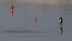 La Torche A4 Rd1 _MG_5107 (thierrybarre) Tags: mer océan surf plage enfant course jeu humain nature bain baignade street