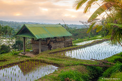 DSC_3336 (Sebastien J Bernard) Tags: jatiluwih rice terraces