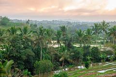 DSC_3333 (Sebastien J Bernard) Tags: jatiluwih rice terraces