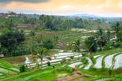 DSC_3329 (Sebastien J Bernard) Tags: jatiluwih rice terraces