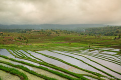 DSC_3352 (Sebastien J Bernard) Tags: jatiluwih rice terraces