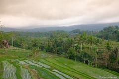 DSC_3344 (Sebastien J Bernard) Tags: jatiluwih rice terraces