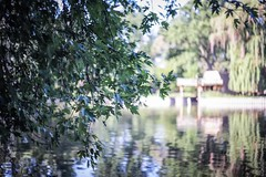 river (Yuki (8-ballmabelleamie)) Tags: mchenrydamstatepark foxriver breeze wind leaves trees reflection nature outdoor