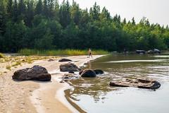 DSC_4190 (olailagus) Tags: dogs labradorretriever labrador retriever goldenretriever golden finland swimming sea coast koira hund kultainennoutaja kultsu lapukka lmaxmo västerö ryssberget