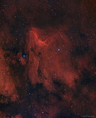 IC5067 - The Pelican Nebula in HaRGB (AstroDLJ) Tags: astrophotography sky universe nebula ic5067 cosmos star space pixinsight hargb pelicannebula photography stars