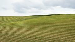 September Days (Bernd Walz) Tags: fieldscape field landscape countryside rural emptiness transformedlandscape artificiallandscape agriculture space vastness minimalistic minimalism