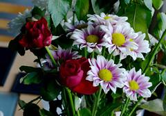Kitchen flowers (lozinka_gergova) Tags: flowers kitchenflowers closeup indoor nikonlens nikon85mm nikonphotography nikond610 photography amateurophotography