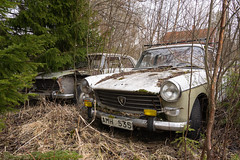 Peugeot 404 mal zwei (mariburg) Tags: peugeot404 peugeot marode alt old sonyalpha7ii sonyfe2470mmf4zaoss auto car