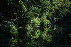 Basingstoke Canal Deepcut 8 September 2019 001 (paul_appleyard) Tags: basingstoke canal deepcut surrey september 2019 water reflections green