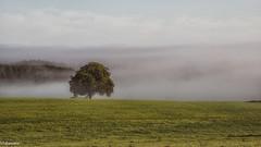 06092019-DSC_0042 (vidjanma) Tags: arbresolitaire brume fagnoux nord