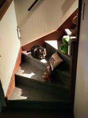 Tigger's Hobby: Being a Trip Hazard on the Stairs (sjrankin) Tags: 8september2019 edited animal cat tigger stairs stairway stuffeddolls night kitahiroshima hokkaido japan