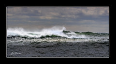 Flying Fast And Furious (windshadow2) Tags: newport rhode island ri 12 mile drive twelve storm waves sea gull stormy hurricane usa weather ocean coast coastal nikon d500