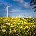 Windräder, windmills