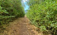 Shaded Trail (ronking1) Tags: julian california unitedstatesofamerica