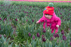 Lily at the Tulip Festival, Woodburn, Oregon (GlennCantor (theskepticaloptimist)) Tags: tulipfestival woodburn oregon lily flowers tulips