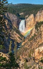 Luck at The Falls (Phil's Pixels) Tags: rainbow rainbowatthefalls lowerfallsoftheyellowstone yellowstoneriver waterfall falls grandcanyonoftheyellowstone artistspoint yellowstonenationalpark wyoming