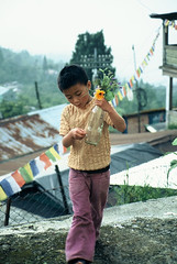 Pretty flowers (Dare to share) Tags: india westbengal sonada darjeeling asia tibetan himalaya child flowers jonasthoren