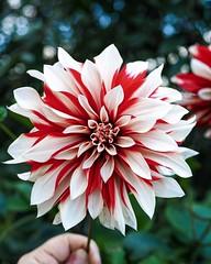 (Alexx053) Tags: natureshot em10iii olympus flower