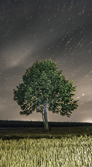 arbre 4-2 (Lordey Thomas) Tags: astrophotographie longueexposition