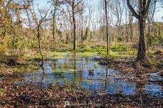 El bosque singular (SantiMB.Photos) Tags: 2blog 2tumblr 2ig invierno winter tordera maresme bosque forest agua water geo:lat=4171496900 geo:lon=272130567 geotagged cataluna españa