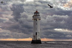 Setting the Mood (alundisleyimages@gmail.com) Tags: lighthouse river bird seagull seascape sunset dusk weather sea calm building clouds evening horizon beacon safety historic maritime shipping weathervane gull nature wildlife environment merseyside