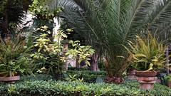 20190908_131754 (uweschami) Tags: spanien espania mallorca palma altstadt arabischesbad palmen hamam mauren banysarabs garten gewölbe