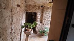 20190908_131928_LLS (uweschami) Tags: spanien espania mallorca palma altstadt arabischesbad palmen hamam mauren banysarabs garten gewölbe