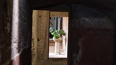 20190908_132023_LLS (uweschami) Tags: spanien espania mallorca palma altstadt arabischesbad palmen hamam mauren banysarabs garten gewölbe