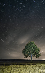 arbre 4 (Lordey Thomas) Tags: astrophotographie longueexposition