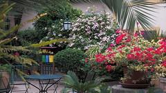 20190908_131810 (uweschami) Tags: spanien espania mallorca palma altstadt arabischesbad palmen hamam mauren banysarabs garten gewölbe