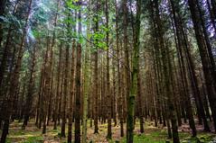 (kuuan) Tags: voigtländerheliarf4515mm manualfocus mf voigtländer15mm aspherical f4515mm superwideheliar apsc trees landscape mostviertel wald forest