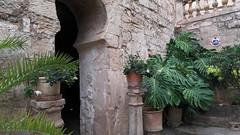 20190908_132252 (uweschami) Tags: spanien espania mallorca palma altstadt arabischesbad palmen hamam mauren banysarabs garten gewölbe